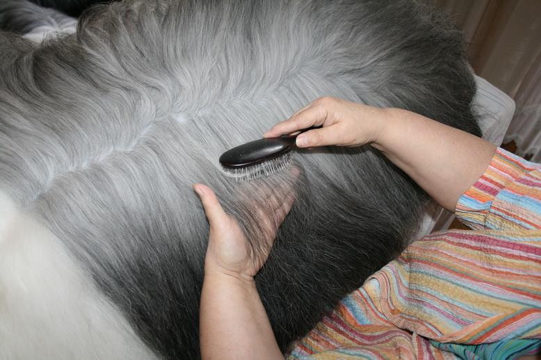 bobtailsonline das portal f r den liebhaber des old english sheepdogs care. Black Bedroom Furniture Sets. Home Design Ideas
